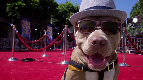 Perro a la moda con gafas oscuras