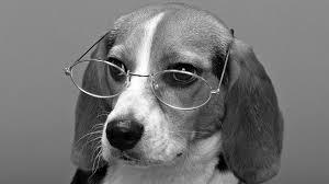 Perro intelectual con gafas blanco y negro