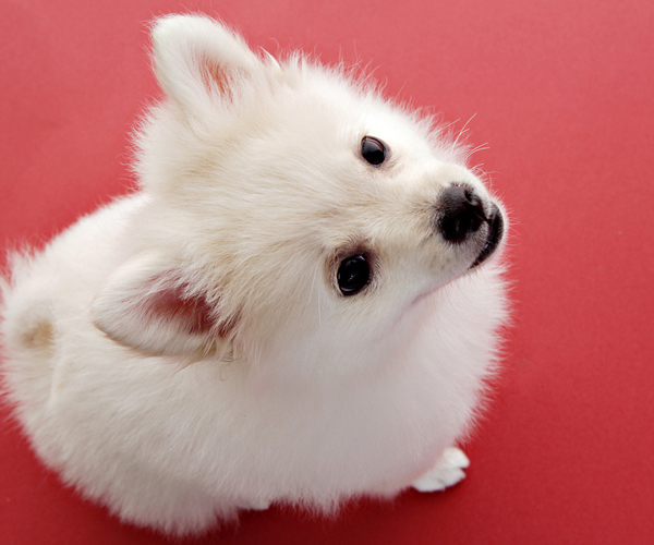 Perro pequeño y tierno