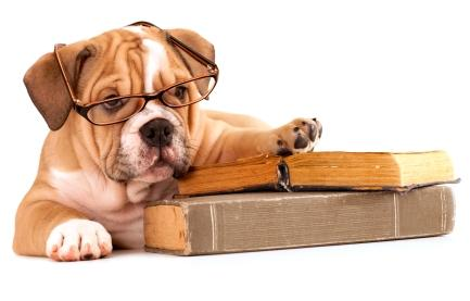 Perros Bull Dog con libros y usando gafas