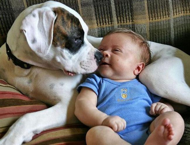 Tiernas imagenes de perros con bebes