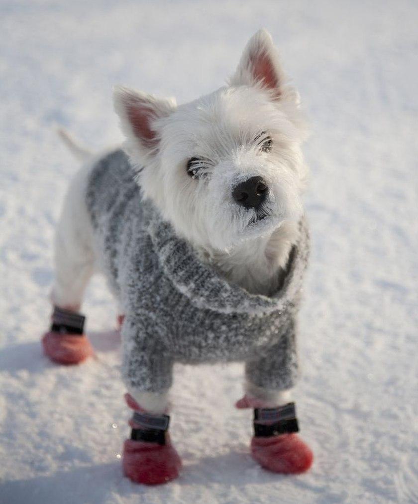Tierno perro pequeño vestido con traje para la nieve