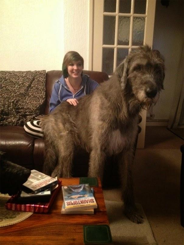 foto con mi perro enorme que aun se cree cachorrito