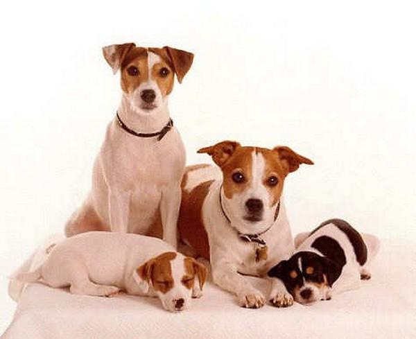 fotos bonitas de familias de perros