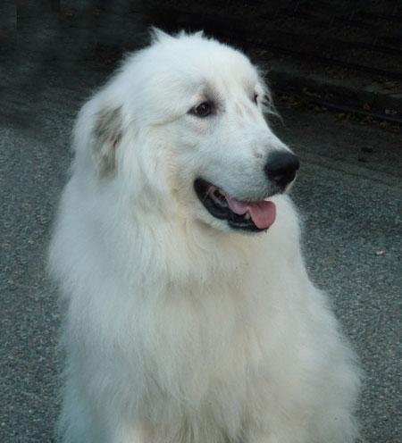 fotos chidas de perros blancos