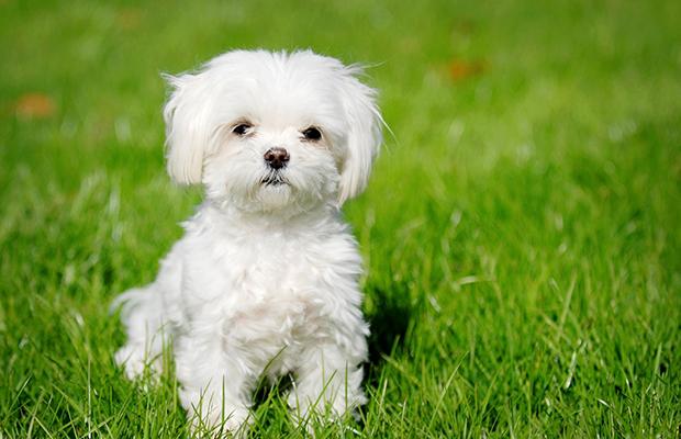 fotos de perritos lindos mini