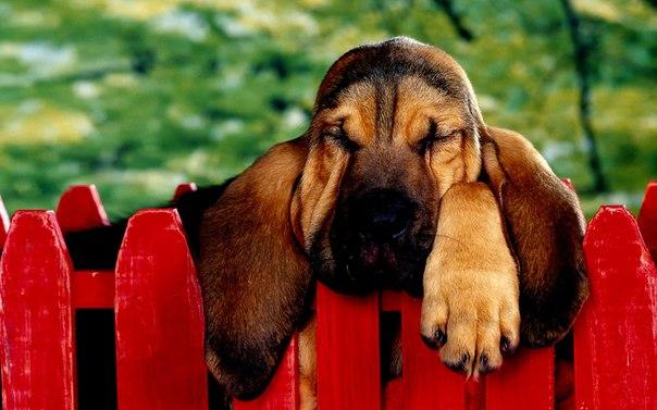 fotos de perros orejones