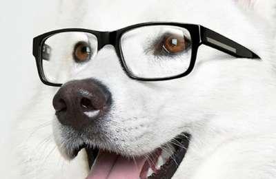 perro con gafas imagen blanco y negro