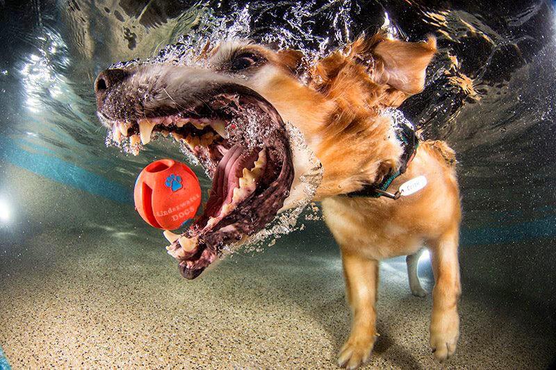 perro que se lanza al agua a atrapar una pelota