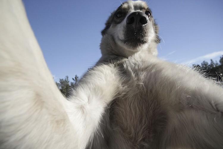 perro tomandose una selfie