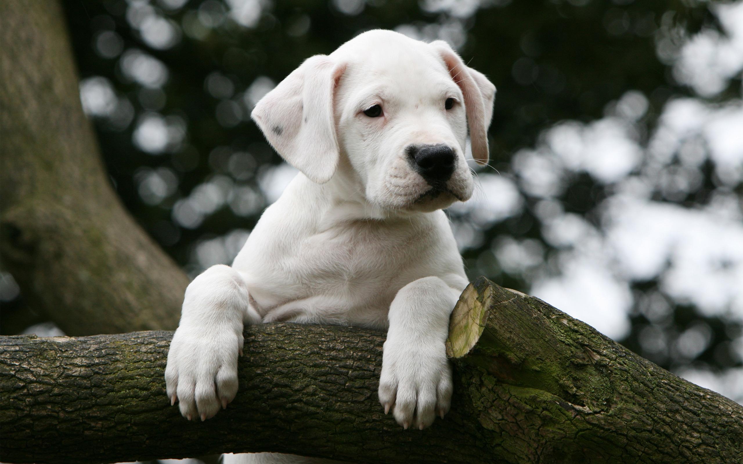 Imagenes Para La Pantalla: Fondos De Pantalla De Cachorros Tiernos