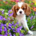 Fotos de Perros En Un Jardin De Flores Para El Celu