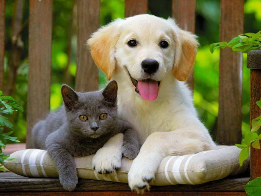 Fondos de pantalla de un perro junto a un gato