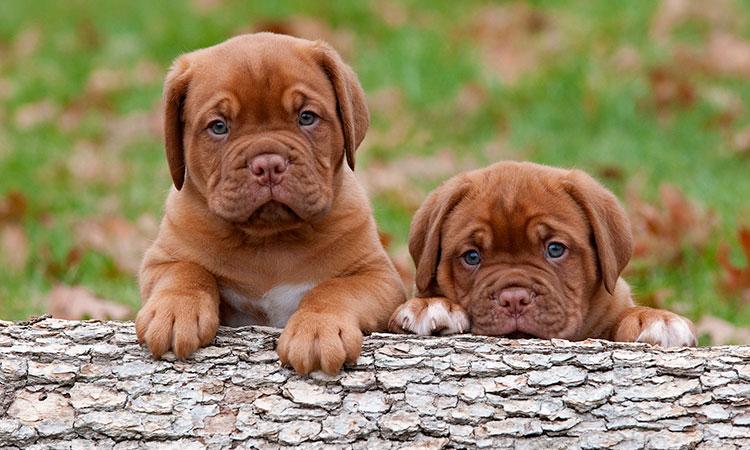 Fotos de perros bonitos y tiernos para fondo del celu