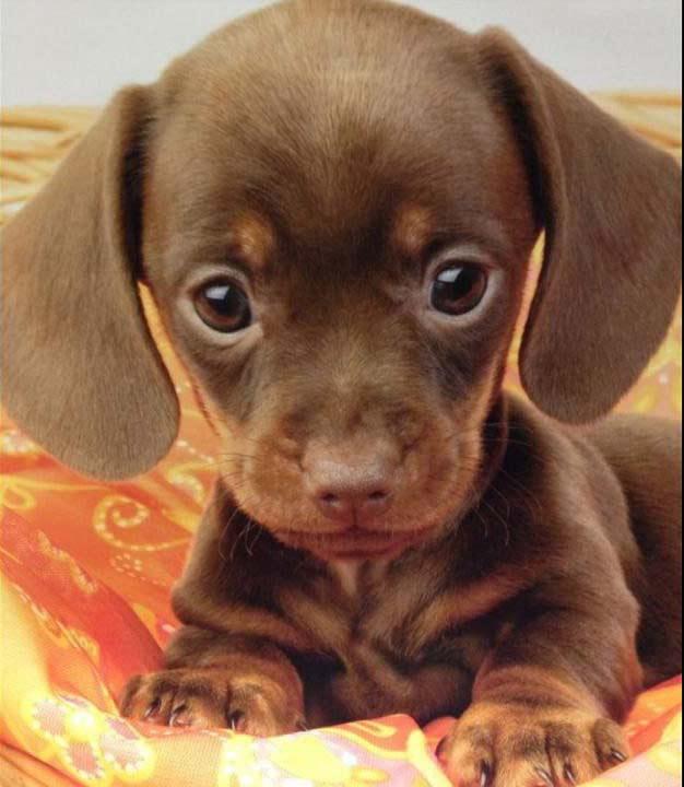 Hermosos cachorritos super tiernos para el celular