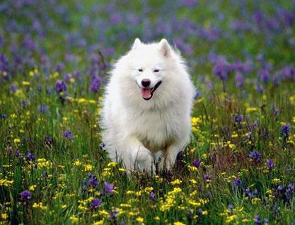 Imagen de un perro en medio de flores