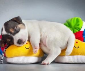 Imagenes de Posturas En Las Que Duermen Los Perritos