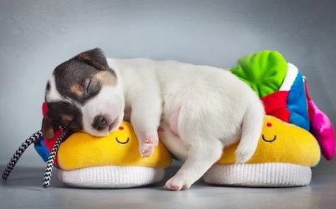 Imagen tierna de un perrito durmiendo