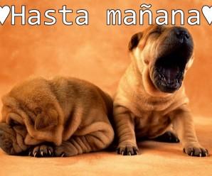 Imagenes De Perros Para Decir Hasta Mañana