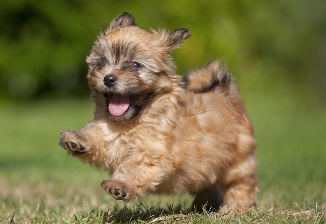 Imagenes de cachorros tiernos para fondo de celular