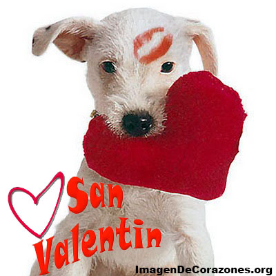 Imagenes de perros con corazon para el dia de san valentin