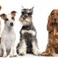 Imagenes De Grupos De Perros