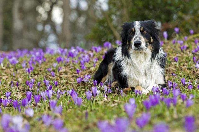 Imagenes de perros en un jardin de flores moradas