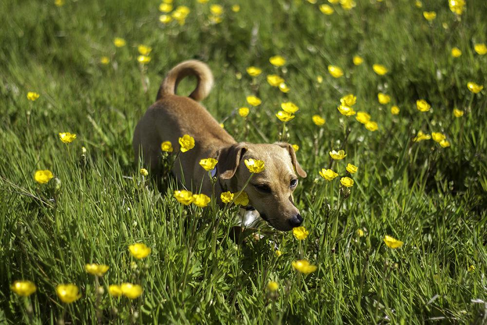 Imagenes de perros en un jardin