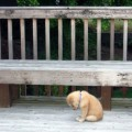 La Mas Tierna Imagen De Un Perrito Triste