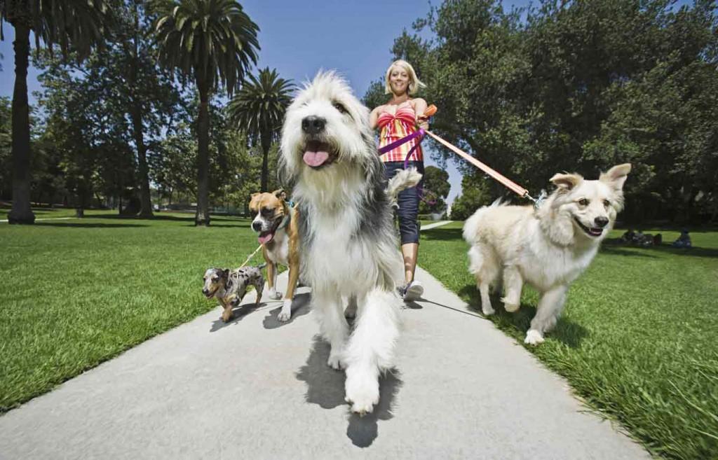 Los fondos de perros mas hermosos para celular