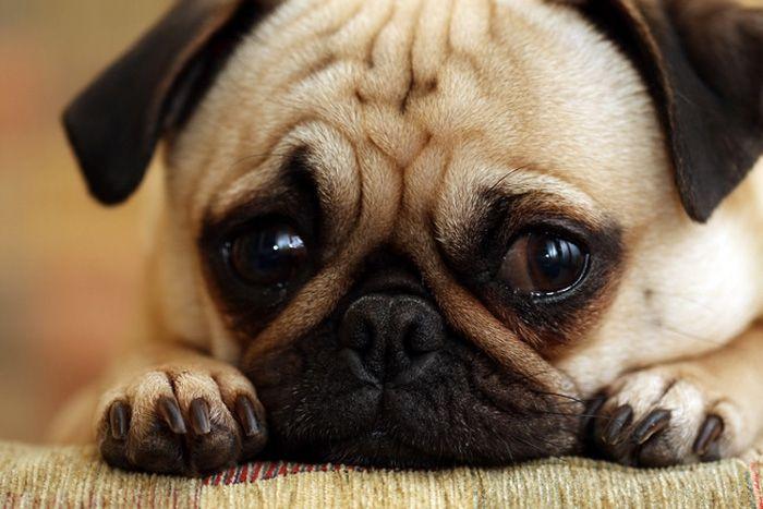 Perritos con caritas muy tristes