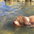 10 Razas de Perros Que Aman El Agua