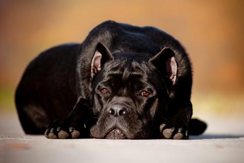 Perros con cara de expresion de tristeza