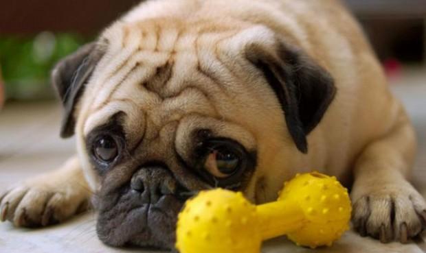 fotos de perros tristes