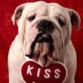 Imagenes De Perros De San Valentin Para Movil