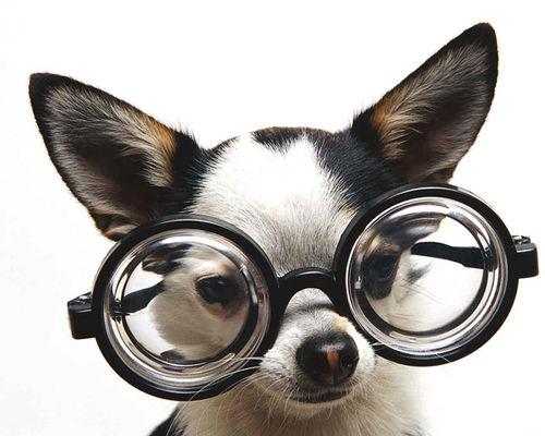 Imagen graciosa de un perro pequeño con unas gafas grandes de aumento