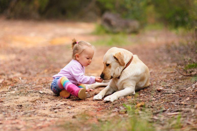 Labrador Retriever raza especial para los niños
