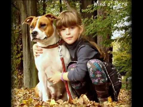 Staffordshire Terrier Americano raza de perros para niños
