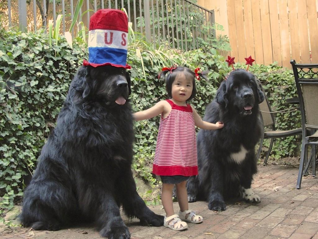 Terranova mejores razas de perro para niños