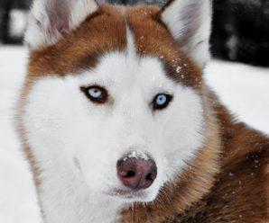 Hermosas Imagenes De Perros Para Usar Como Fondo De Celular