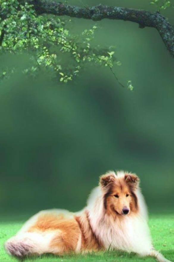 Hermosos fondos de pantalla de perros para el celular