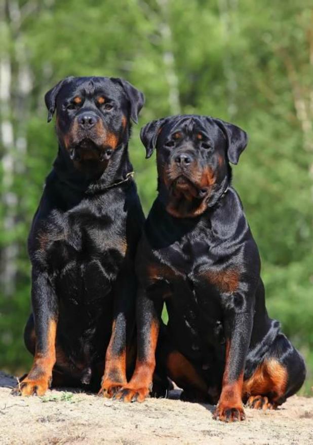 Hermosos perros para fondo de pantalla de celular