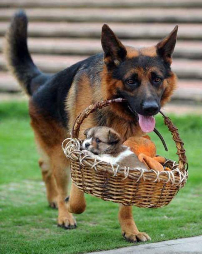 Lindas imagenes de perros para fondo de celular