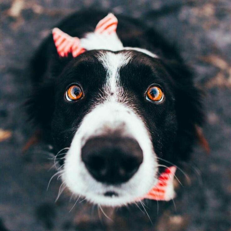 Lindos perros para fondo de pantalla