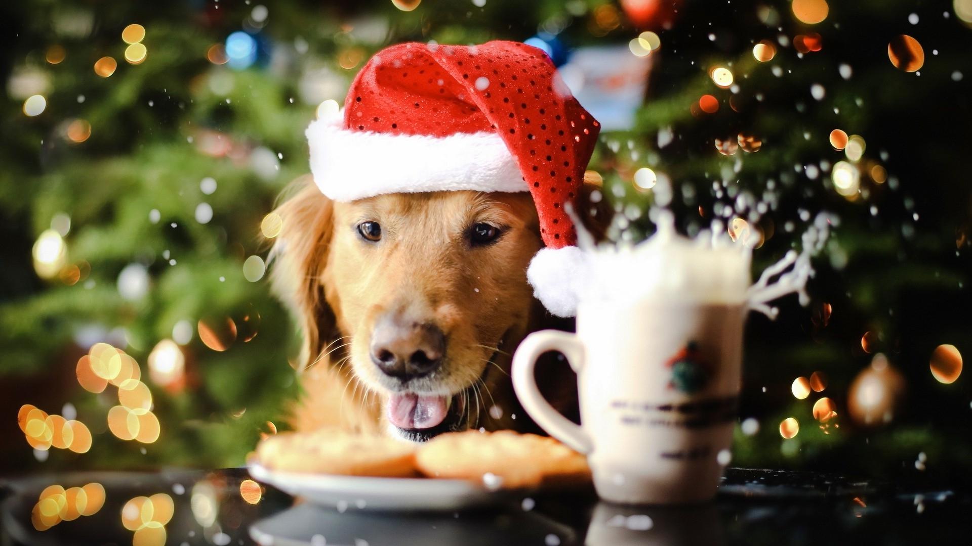 bonitas-imagenes-de-perros-navidenos-para-fondo-de-escritorio
