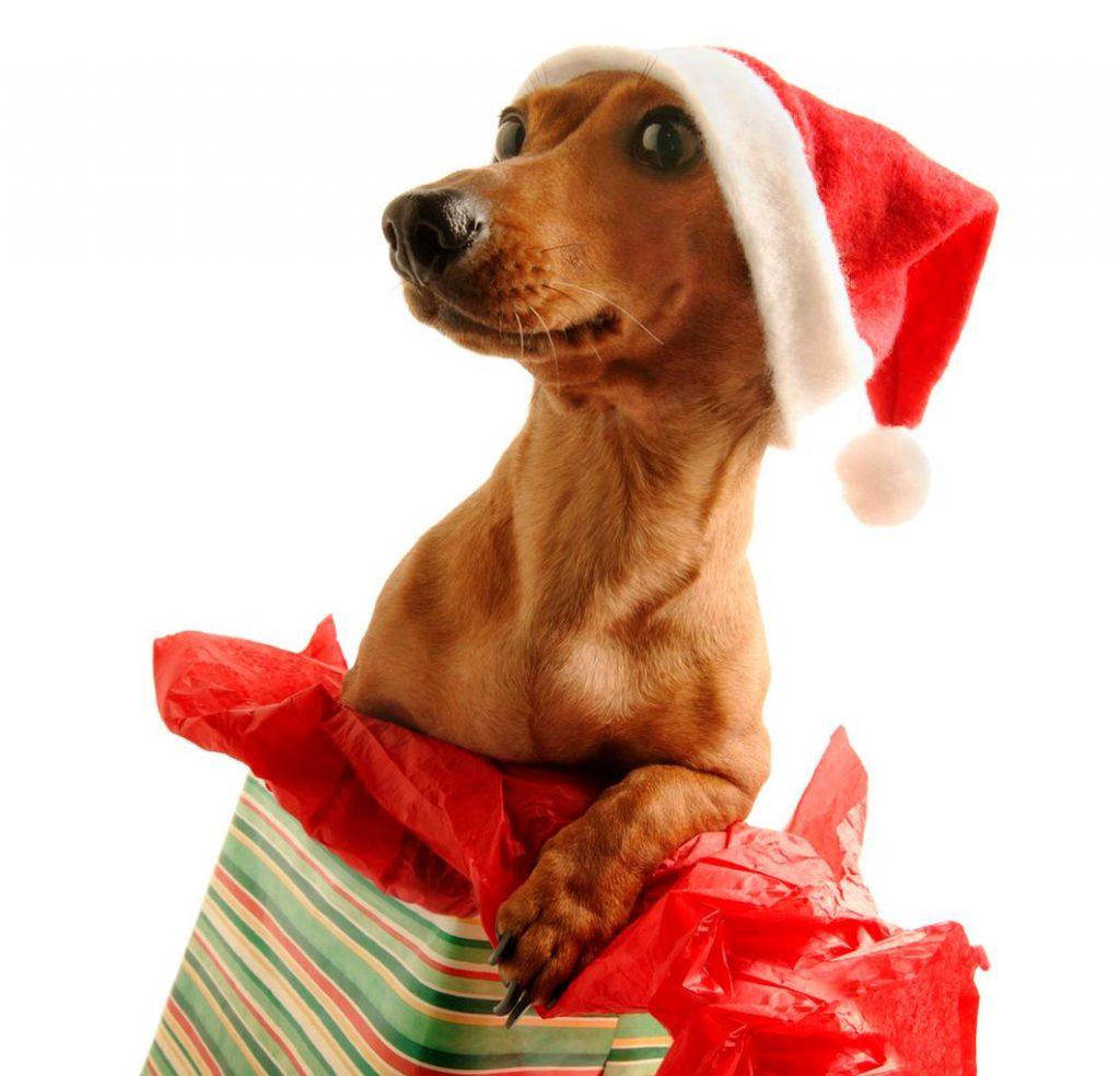 feliz-navidad-imagen-de-un-perrito-saliendo-de-un-regalo