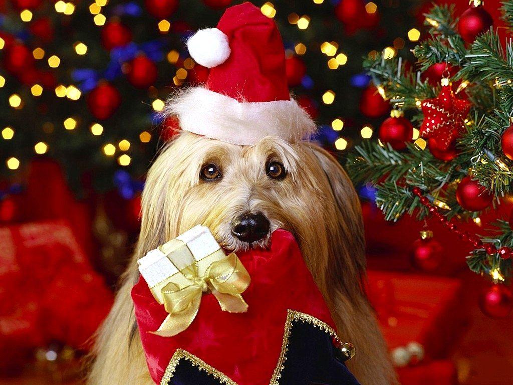 fondos-de-pantalla-navidenos-de-perritos-para-descargar