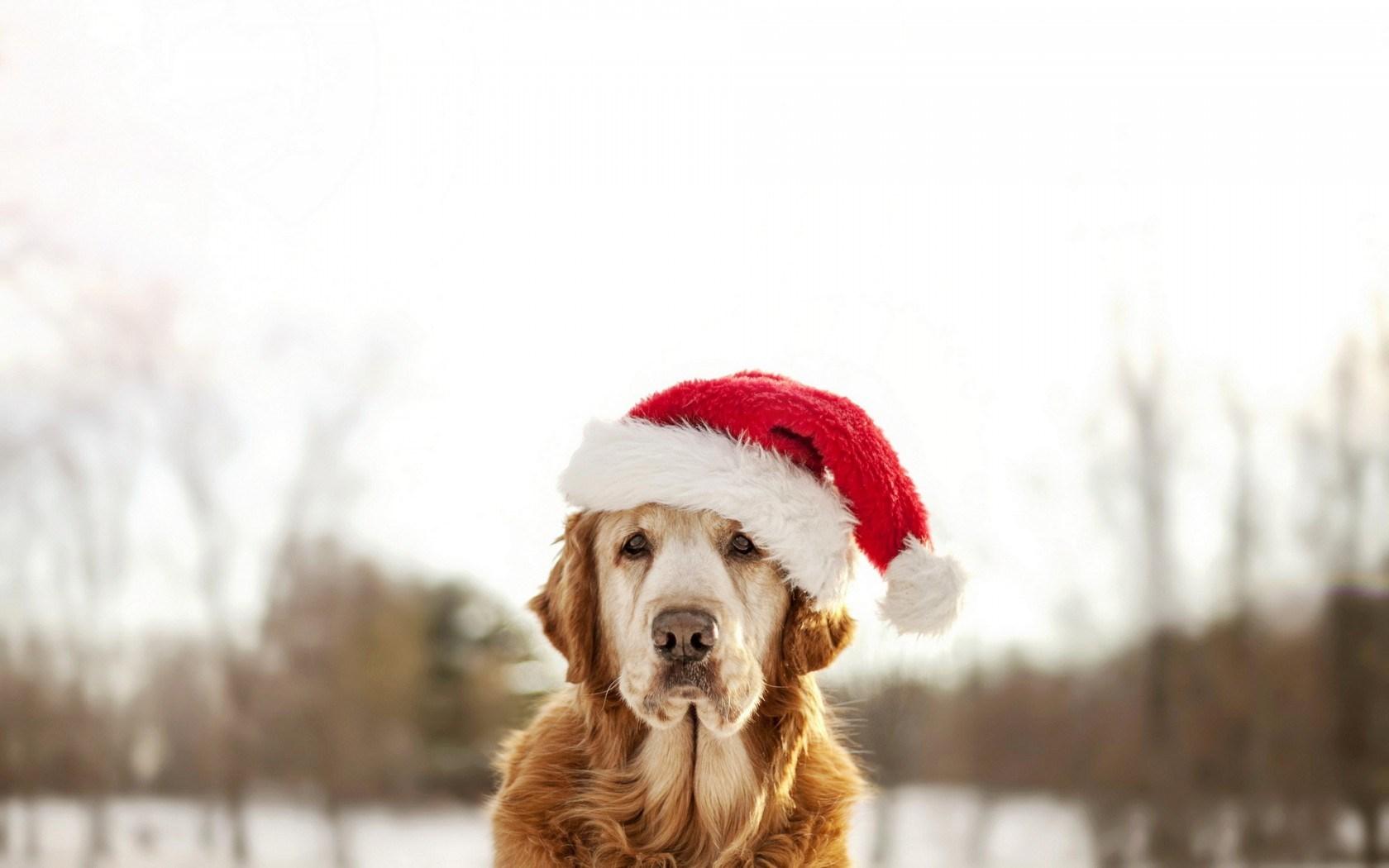 fondos-de-escritorio-de-perritos-navidenos