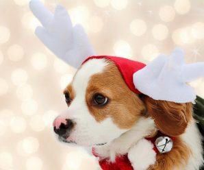 Fondos de Pantalla Navideños De Perritos Para Descargar