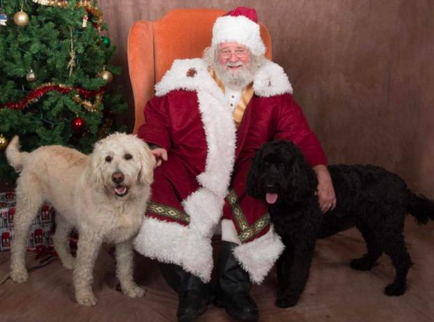 fotos-de-santa-claus-con-perritos-en-el-arbol-de-navidad